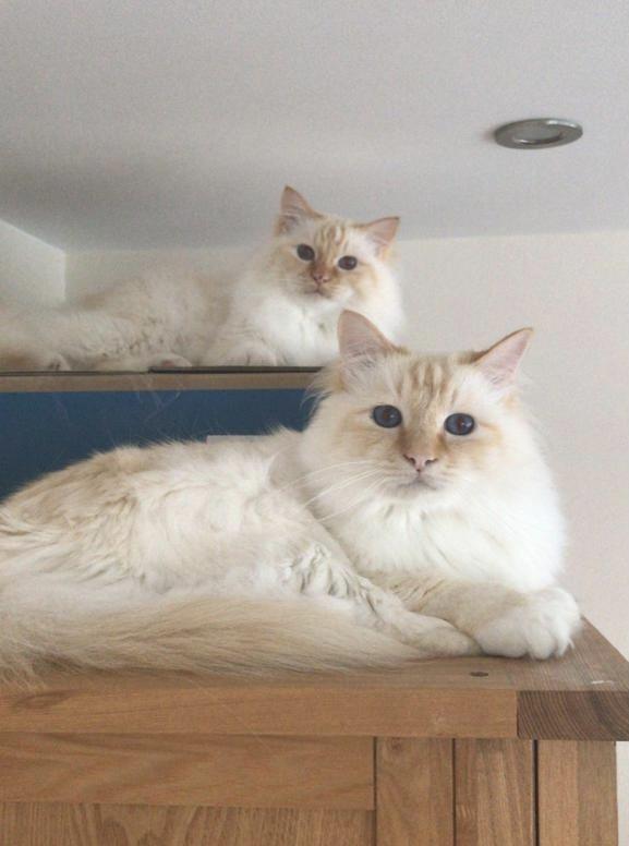 Hamish & Alfie -